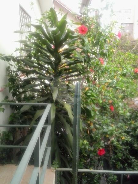 Venda Casa Belo Horizonte Serra REO1582 23