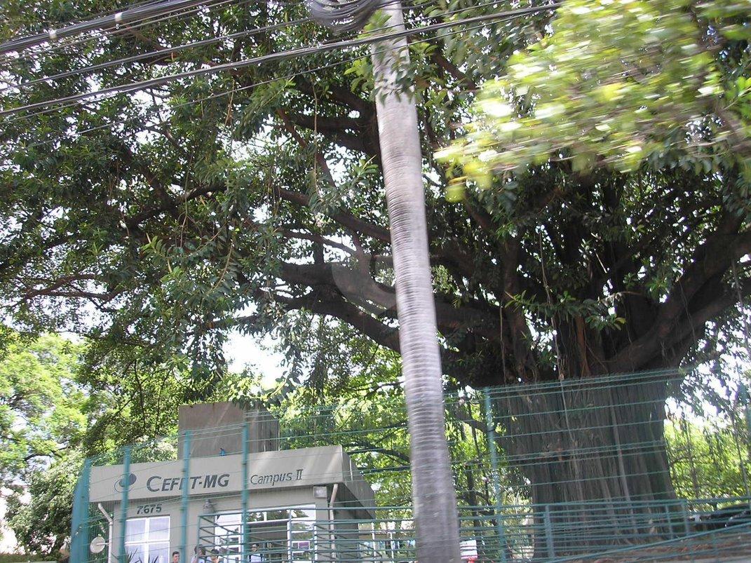Venda Casa Belo Horizonte Jardinópolis REO191813 17