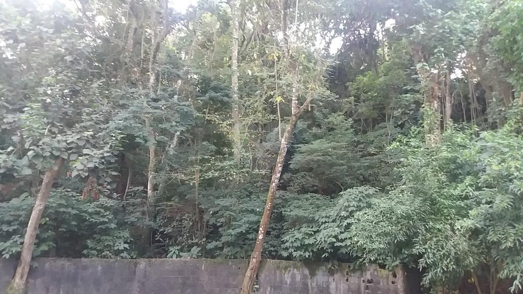 Venda Terreno São Paulo Tucuruvi REO323981 1