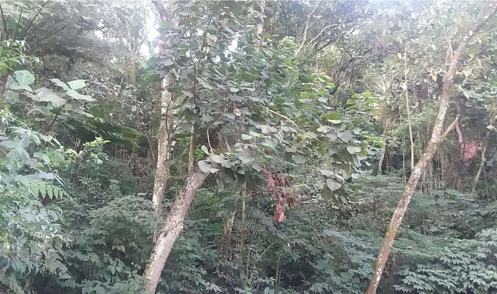Venda Terreno São Paulo Tucuruvi REO323981 20